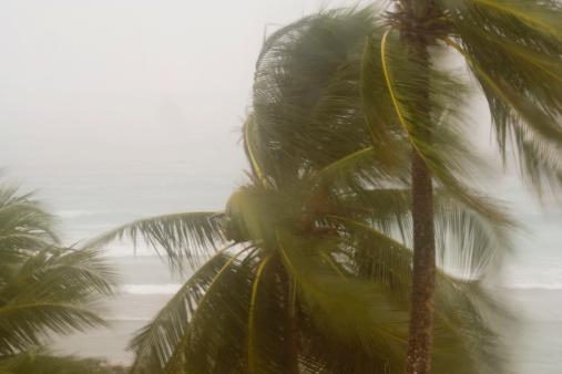 Tropical Storm「Hurricane Winds」:スマホ壁紙(13)