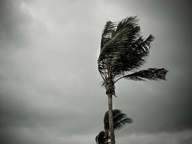 Hurricane winds pound the shore:スマホ壁紙(壁紙.com)