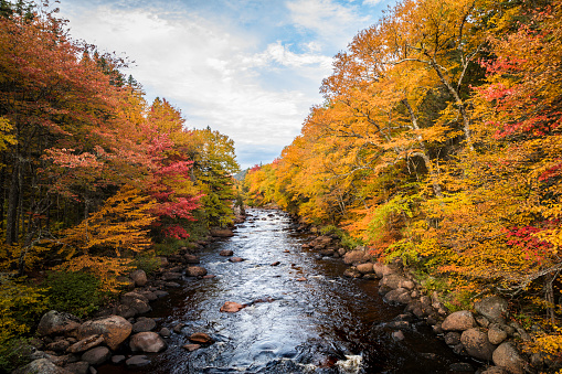 Boreal Forest「Boreal Forest Nature and River in Autumn Season, Quebec, Canada」:スマホ壁紙(14)