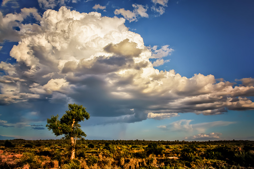 cloud「Rural outback landscape, Yanchep, western Australia, Australia」:スマホ壁紙(3)