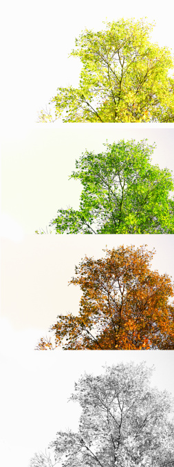 季節「Birch tree through four seasons,Scotland」:スマホ壁紙(14)