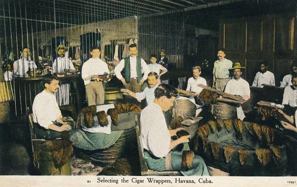 Tobacco Crop「'Selecting The Cigar Wrappers, Havana, Cuba', C1910」:写真・画像(15)[壁紙.com]