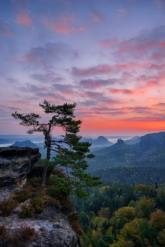 Single Tree「Pine tree with view to the mountain Winterstein and the Hinteres Raubschloß in the Kleinen Zschand seen from the Gleitmannshorn at sunrise / dawn. Kleiner Zschand, Hinteres Raubschloß, Gleitmannshorn, Winterstein, Elbe Sandstone Mountains, Saxon Switzerl」:スマホ壁紙(8)
