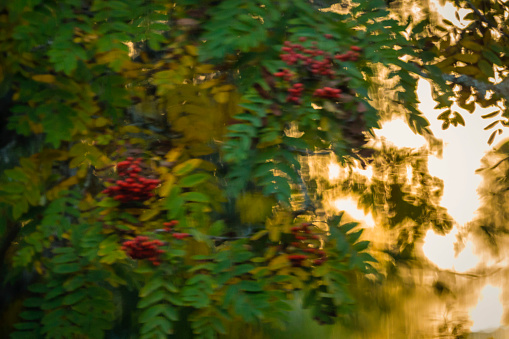 Rowanberry「Rowanberry tree and sunset shot through window」:スマホ壁紙(18)