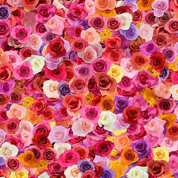 Colorful Roses:スマホ壁紙(壁紙.com)