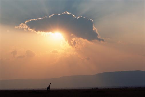Giraffe「Sunburst above silhouette of giraffe (Giraffa camelopardalis), sunset」:スマホ壁紙(6)