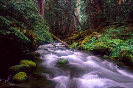 Willamette National Forest「Pamilia Creek, Cascade Mountains」:スマホ壁紙(10)