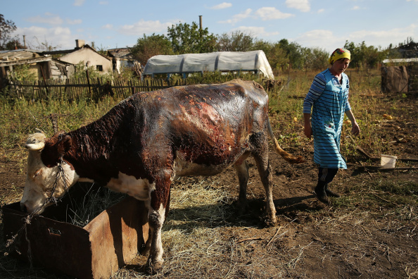 Front or Back Yard「Pro-Russian Separatists Control Eastern Ukraine City Of Lugansk」:写真・画像(13)[壁紙.com]