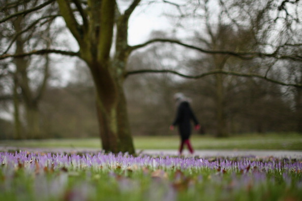 Crocus「The First Day Of Spring At Kew Gardens」:写真・画像(17)[壁紙.com]