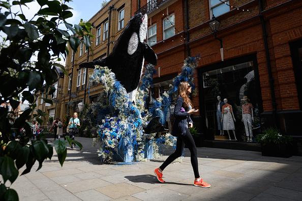 Killer Whale「Local Businesses Support The Chelsea Flower Show」:写真・画像(2)[壁紙.com]