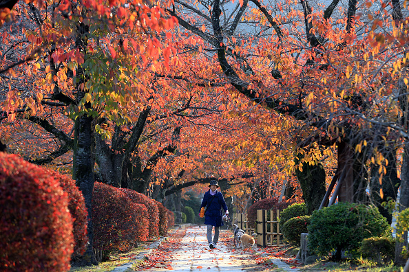 紅葉「People Enjoy Autumn Colors In Kyoto」:写真・画像(3)[壁紙.com]