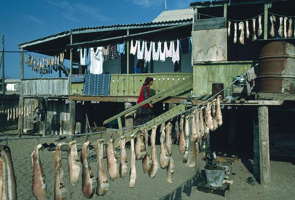 Healthy Eating「Fishing For Sturgeon」:写真・画像(1)[壁紙.com]