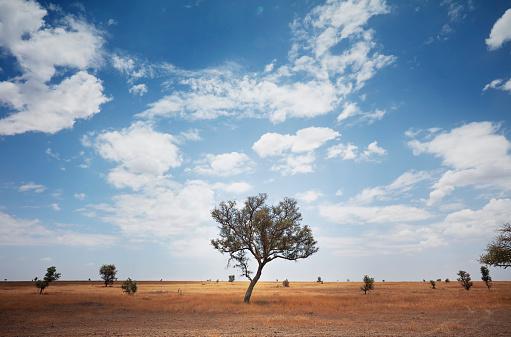 UNESCO World Heritage Site「Expansive view of barren savanna with Acacia tree in Serengeti National Park, Tanzania」:スマホ壁紙(6)
