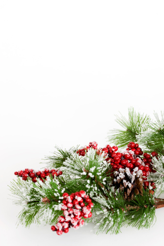 Pine Cone「Border of Snowy Tree Branch and Holly Berries on White」:スマホ壁紙(1)