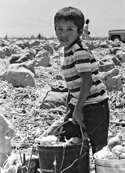 Obsolete「Child Working In Onion Fields」:写真・画像(12)[壁紙.com]