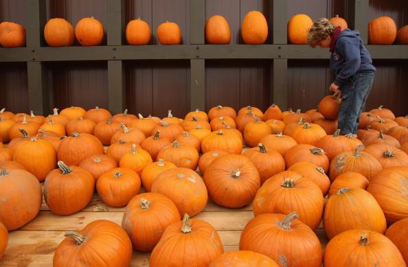 Pumpkin「Pumpkin Mania」:写真・画像(9)[壁紙.com]