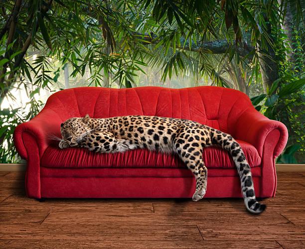 large pussy cat - leopard sleeping:スマホ壁紙(壁紙.com)