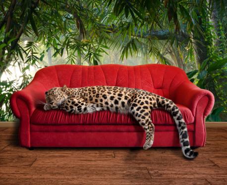 Panther「large pussy cat - leopard sleeping」:スマホ壁紙(2)