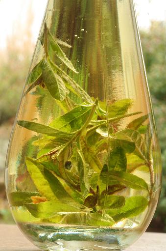 Lemon Verbena「herb infused oil detail」:スマホ壁紙(16)