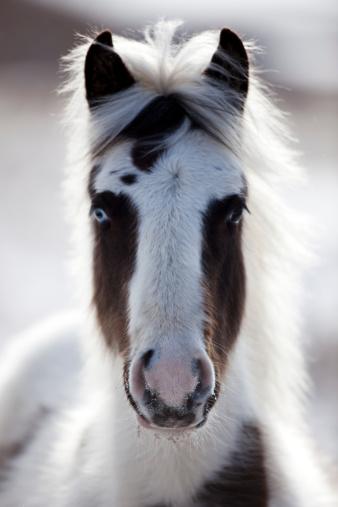 Stallion「Spooky Horse」:スマホ壁紙(14)