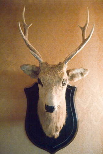 人物「Stuffed deer head hanging on wall」:スマホ壁紙(15)