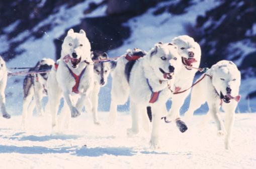 Dogsledding「Huskies Pulling Sled」:スマホ壁紙(16)