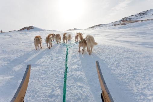 Dogsledding「Huskies pulling dog sled up a hill, East Greenland」:スマホ壁紙(6)