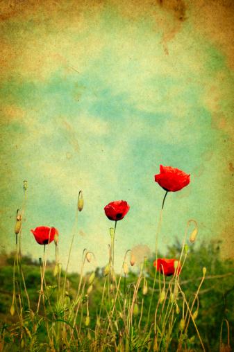花壇「ワイルド poppies 、レトロなスタイルの写真」:スマホ壁紙(11)