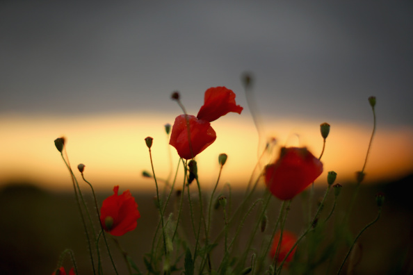 Agricultural Field「Flanders Fields 100 Years Since The Great War」:写真・画像(5)[壁紙.com]