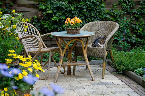 Ornamental Garden「Garden Patio with Wicker Furniture and Housecat」:スマホ壁紙(9)