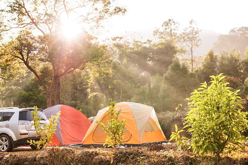 Tent「Tents and RV in forest with sunlight」:スマホ壁紙(11)
