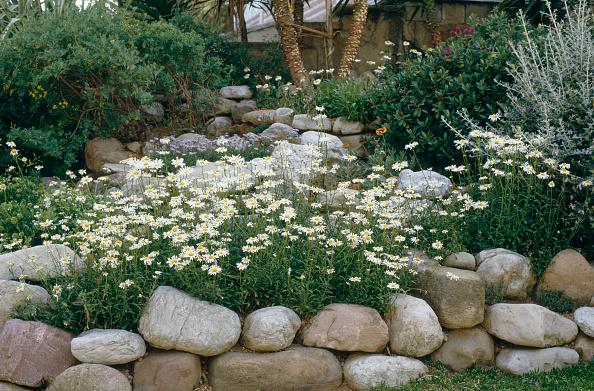 葉・植物「Detail of typical mediterranean plants」:写真・画像(6)[壁紙.com]