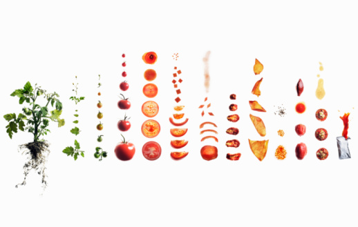 Tomato「Tomato dissection: from plant to ketchup.」:スマホ壁紙(15)