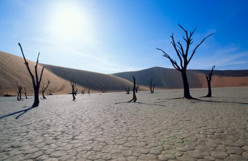 Inferno「Trees in desert」:スマホ壁紙(12)