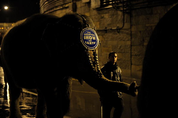 Ringling Brothers and Barnum & Bailey Circus「2010 Ringling Bros. And Barnum & Bailey Circus Elephant Parade」:写真・画像(3)[壁紙.com]