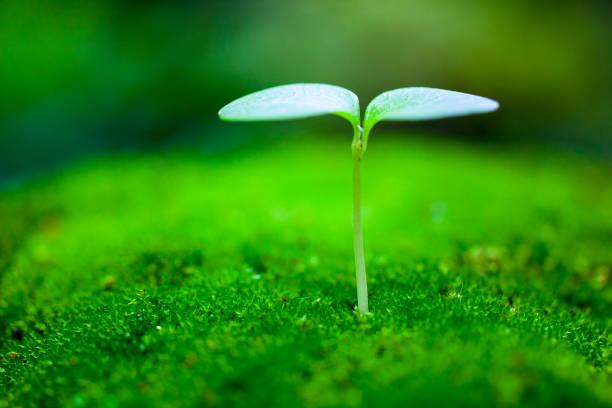 Sprout growing:スマホ壁紙(壁紙.com)