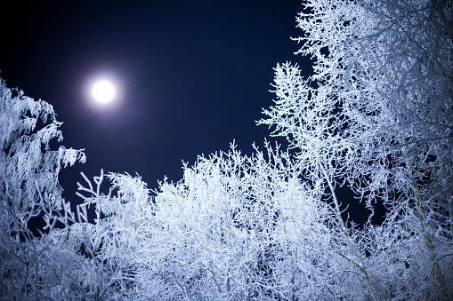 月「月の光」:スマホ壁紙(11)