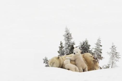 Bear Cub「Churchill, Manitoba, Canada」:スマホ壁紙(12)