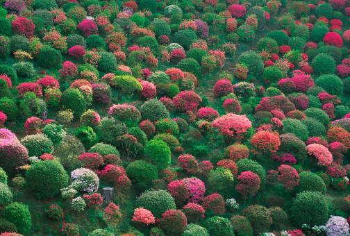 里山「「Azalea 」の庭園」:スマホ壁紙(7)