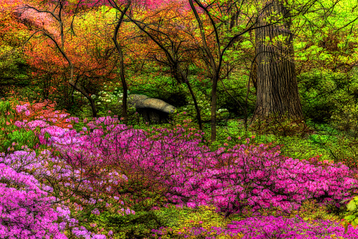 植物園「Azalea Garden, New York Botanical Garden」:スマホ壁紙(12)