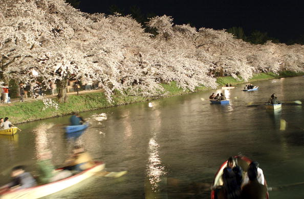 夜桜「Crowds Attend The Hirosaki Cherry Blossom Festival」:写真・画像(8)[壁紙.com]
