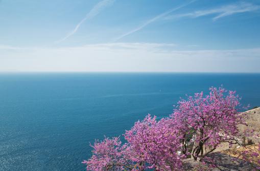 アマルフィ海岸「flowering trees on the Amalfi Coast」:スマホ壁紙(9)
