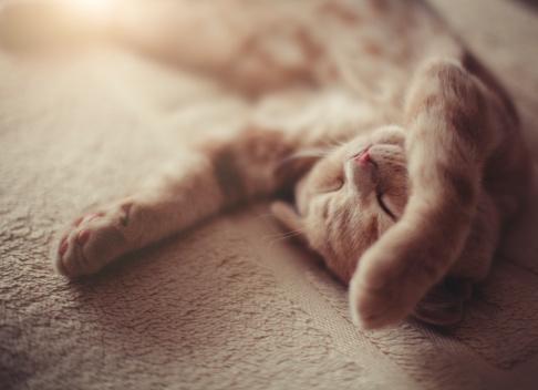 Cat「Sleeping kitty」:スマホ壁紙(10)