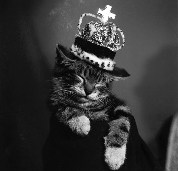 Kitten「Royal Cat」:写真・画像(2)[壁紙.com]