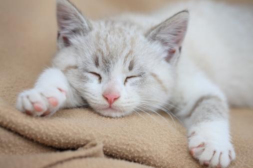 Kitten「Sleeping Kitten」:スマホ壁紙(17)