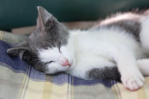 Kitten「Sleeping kitten」:スマホ壁紙(14)