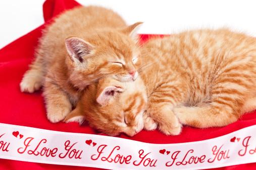 子猫「寝室 Kittens」:スマホ壁紙(5)