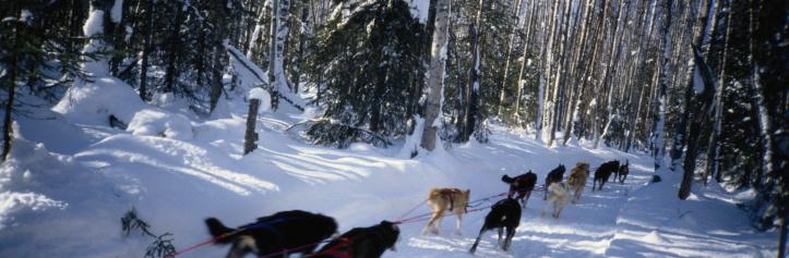 Sled「Team of Sled Dogs」:スマホ壁紙(8)
