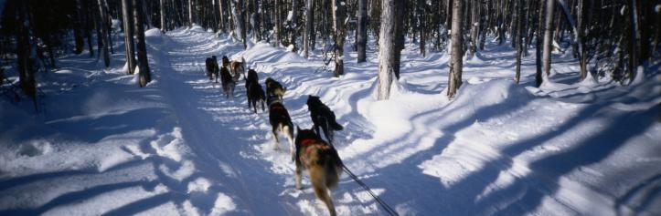 Sled「Team of Sled Dogs」:スマホ壁紙(13)