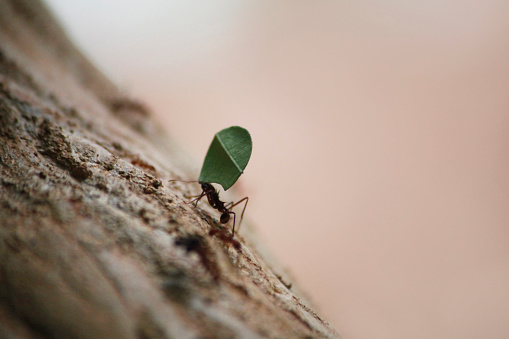 Effort「Ant carrying cut Leaf back to nest uphill」:スマホ壁紙(4)